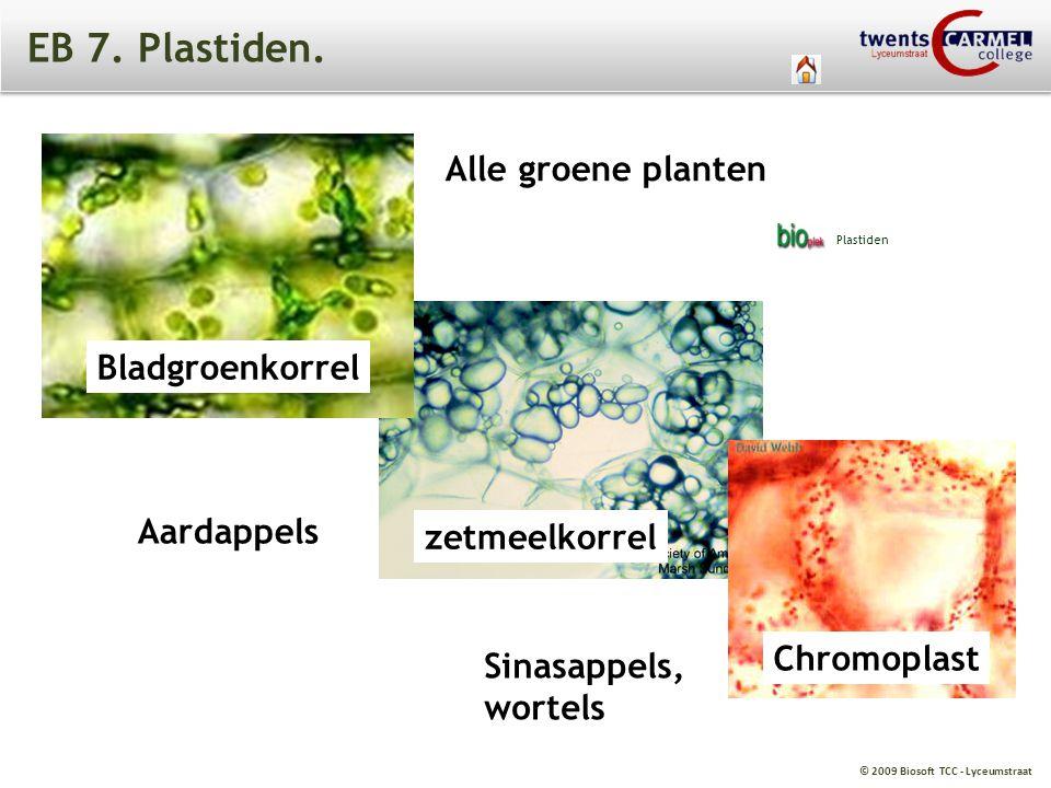 EB 7. Plastiden. Alle groene planten Bladgroenkorrel Aardappels