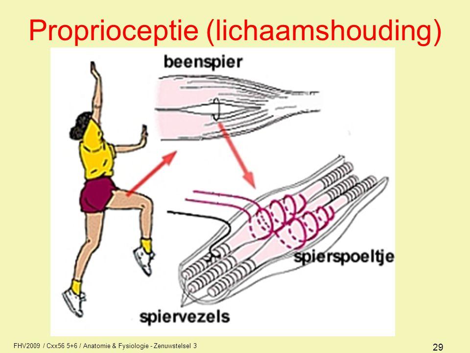 Proprioceptie (lichaamshouding)