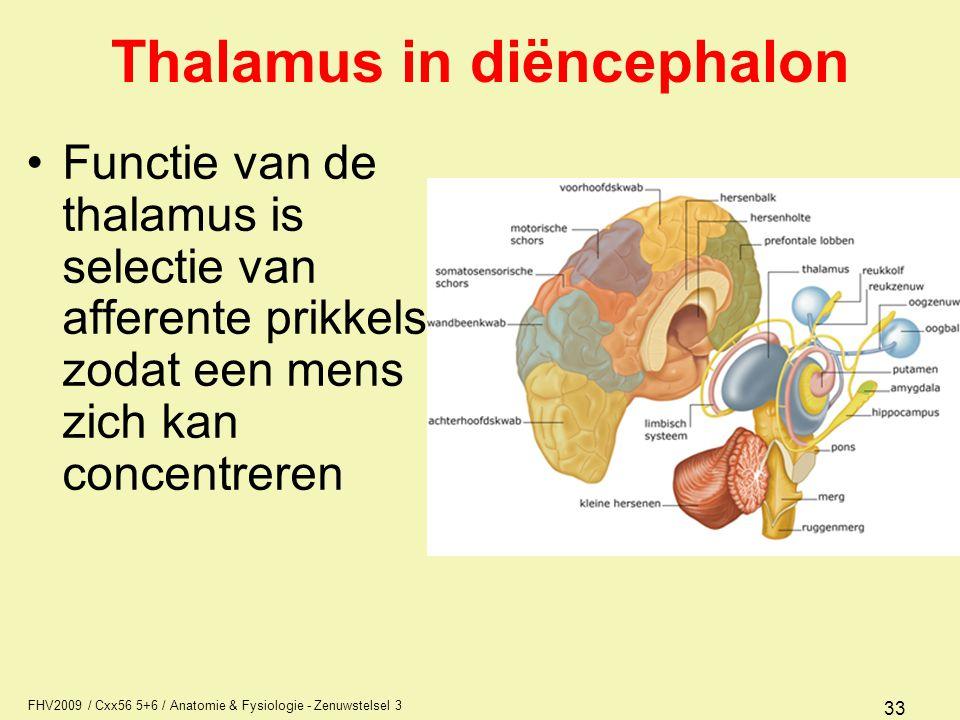 Thalamus in diëncephalon