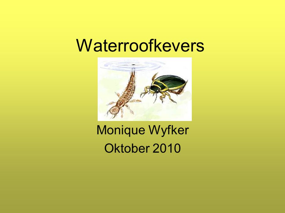 Monique Wyfker Oktober 2010