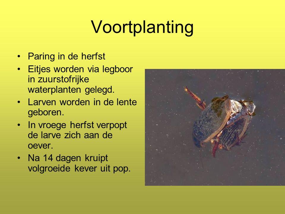 Voortplanting Paring in de herfst