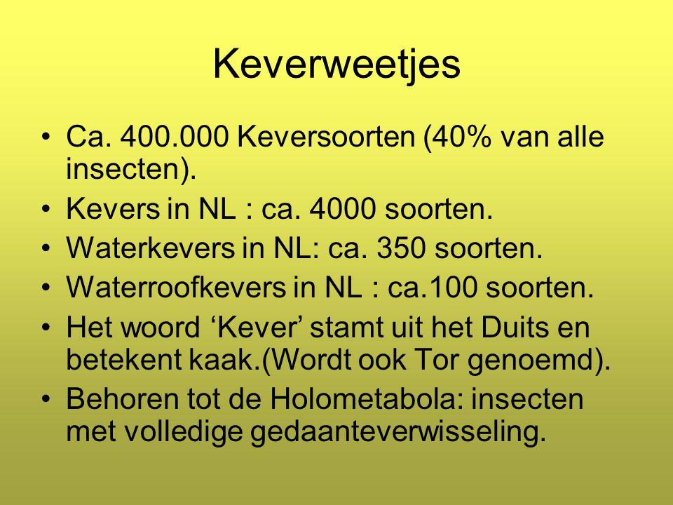 Keverweetjes Ca. 400.000 Keversoorten (40% van alle insecten).
