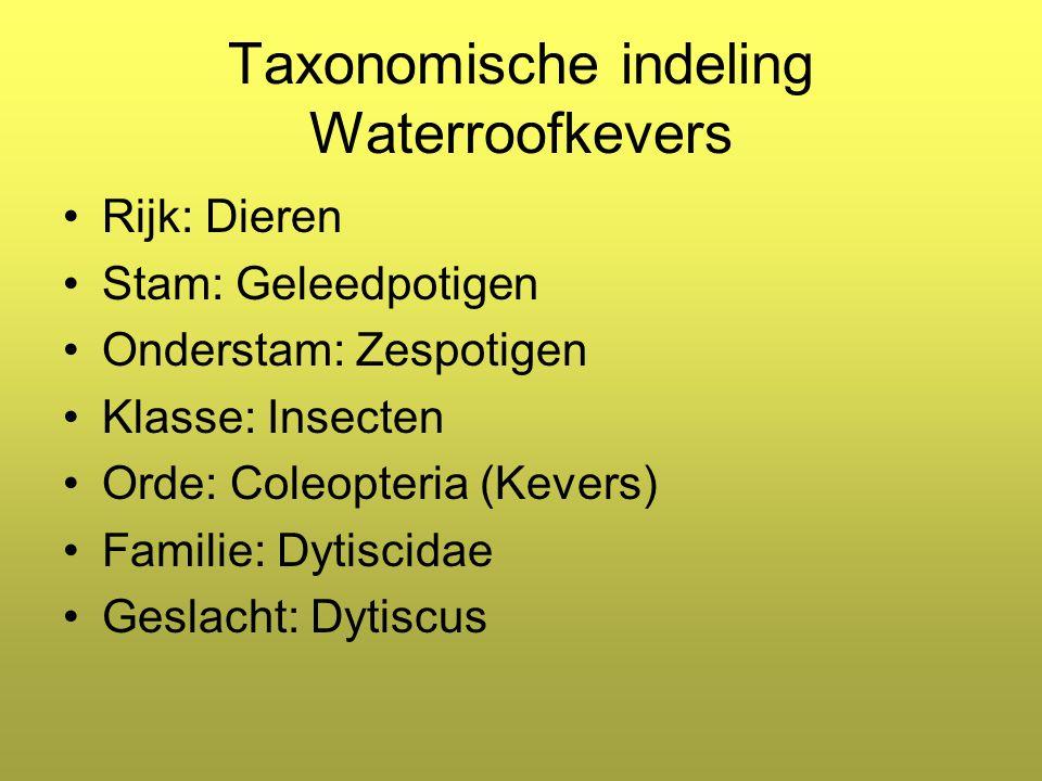 Taxonomische indeling Waterroofkevers