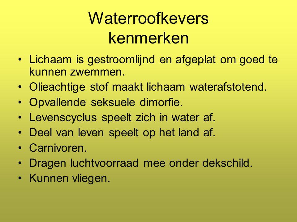 Waterroofkevers kenmerken