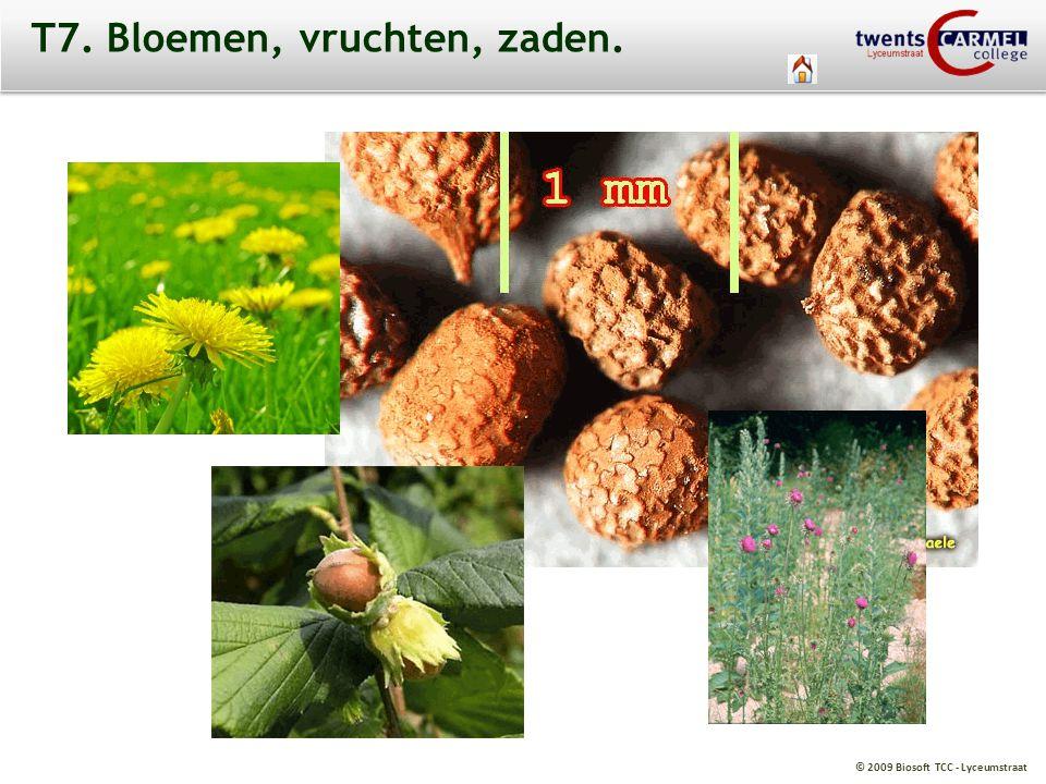 T7. Bloemen, vruchten, zaden.
