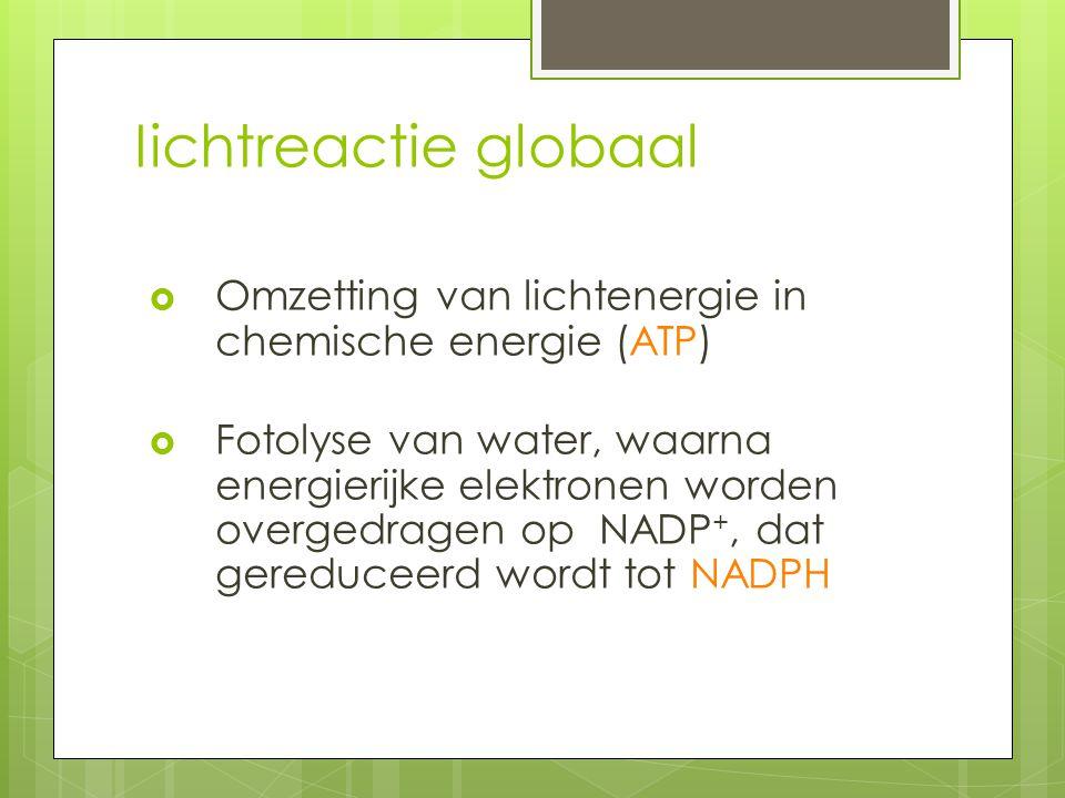 Iichtreactie globaal Omzetting van lichtenergie in chemische energie (ATP)