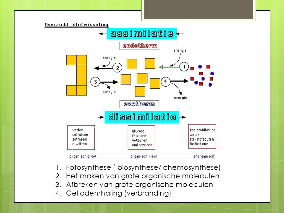 Fotosynthese ( biosynthese/ chemosynthese)