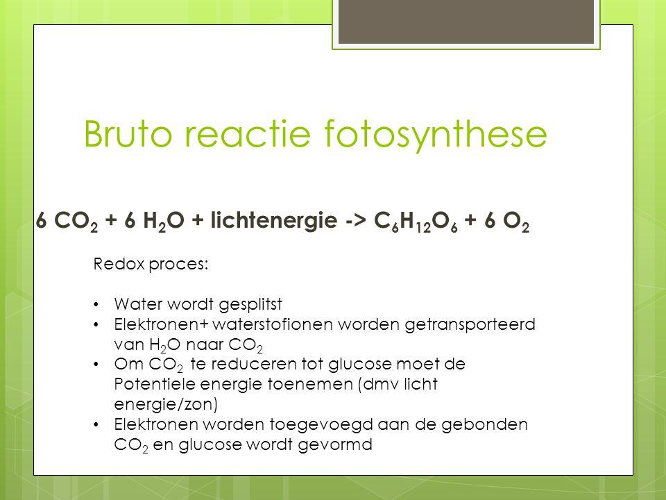 Bruto reactie fotosynthese