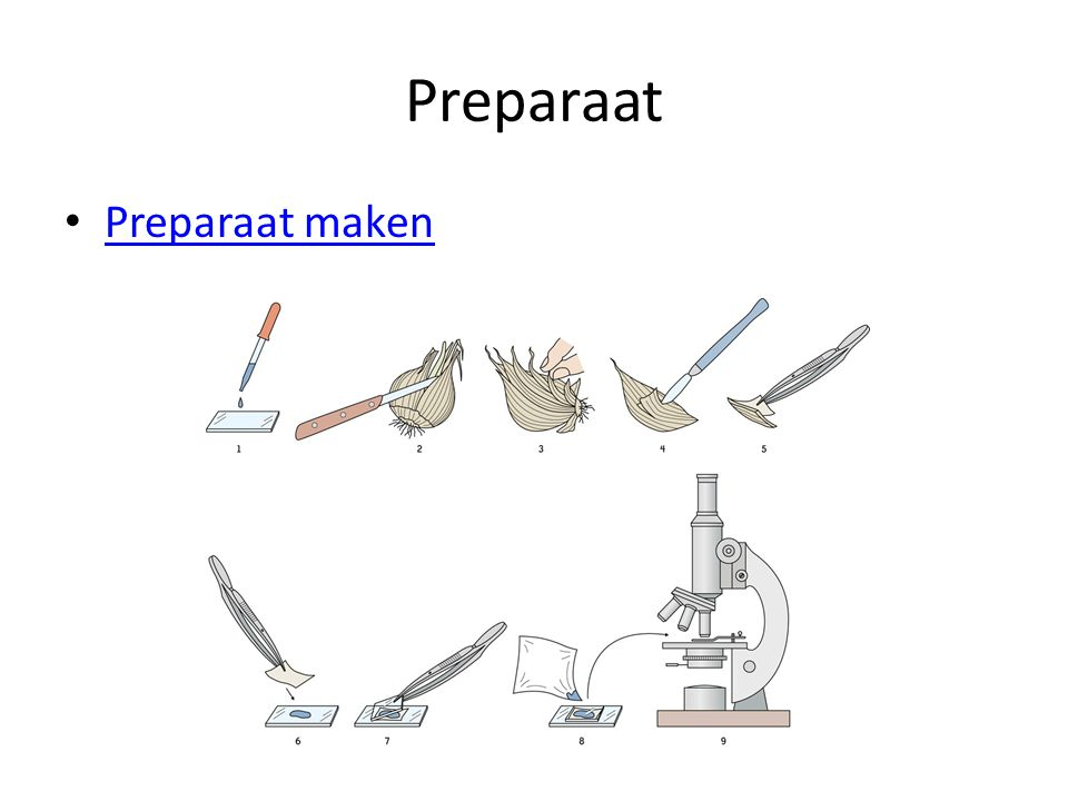 Preparaat Preparaat maken
