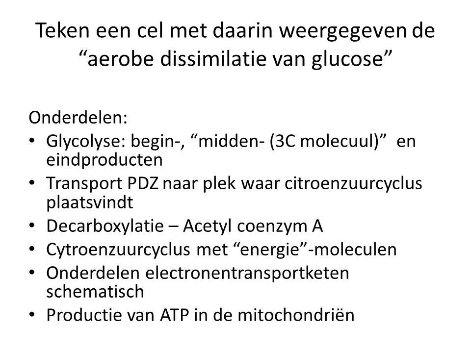 Teken een cel met daarin weergegeven de aerobe dissimilatie van glucose