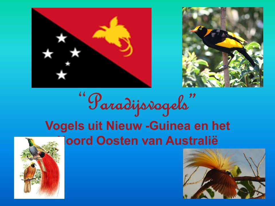 Vogels uit Nieuw -Guinea en het Noord Oosten van Australië