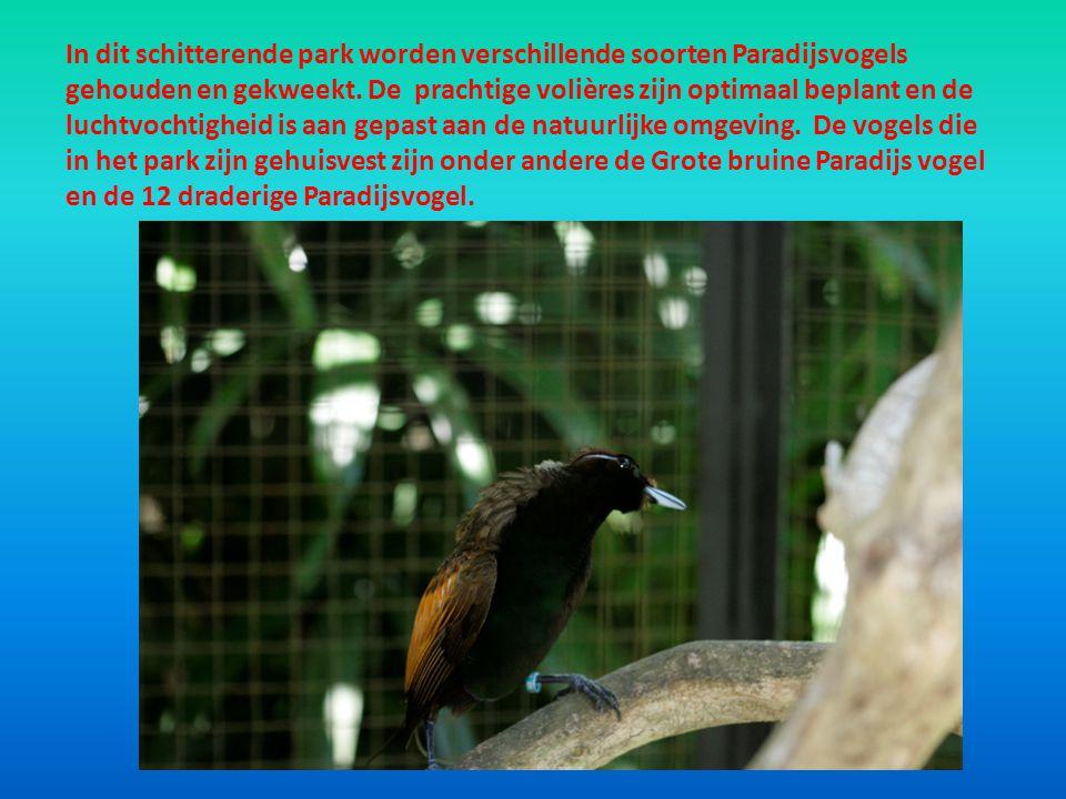In dit schitterende park worden verschillende soorten Paradijsvogels gehouden en gekweekt.