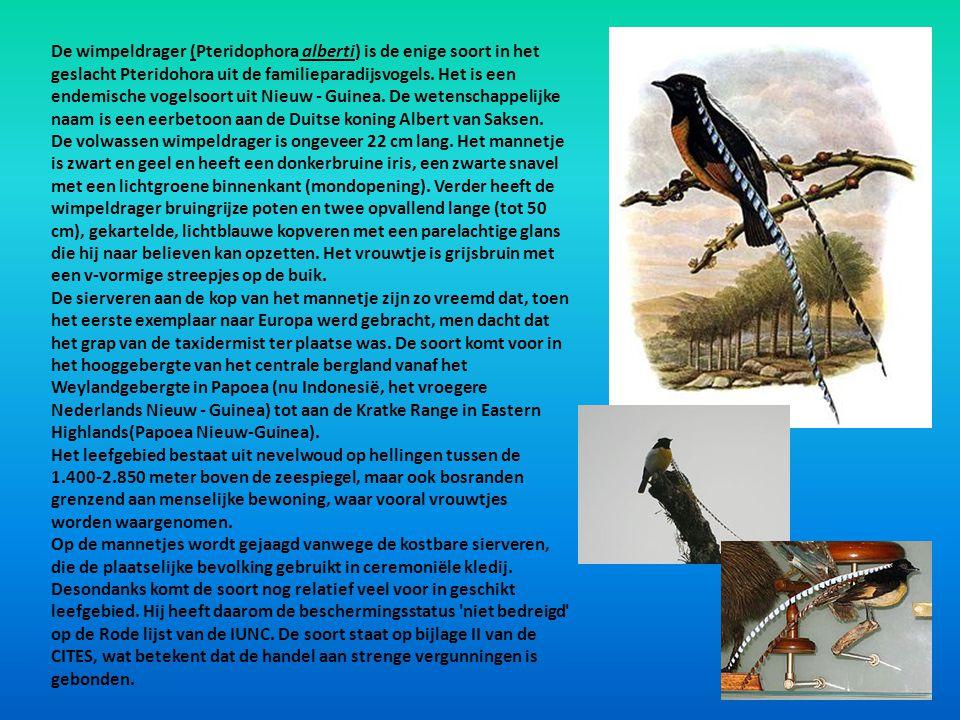 De wimpeldrager (Pteridophora alberti) is de enige soort in het geslacht Pteridohora uit de familieparadijsvogels. Het is een endemische vogelsoort uit Nieuw - Guinea. De wetenschappelijke naam is een eerbetoon aan de Duitse koning Albert van Saksen.