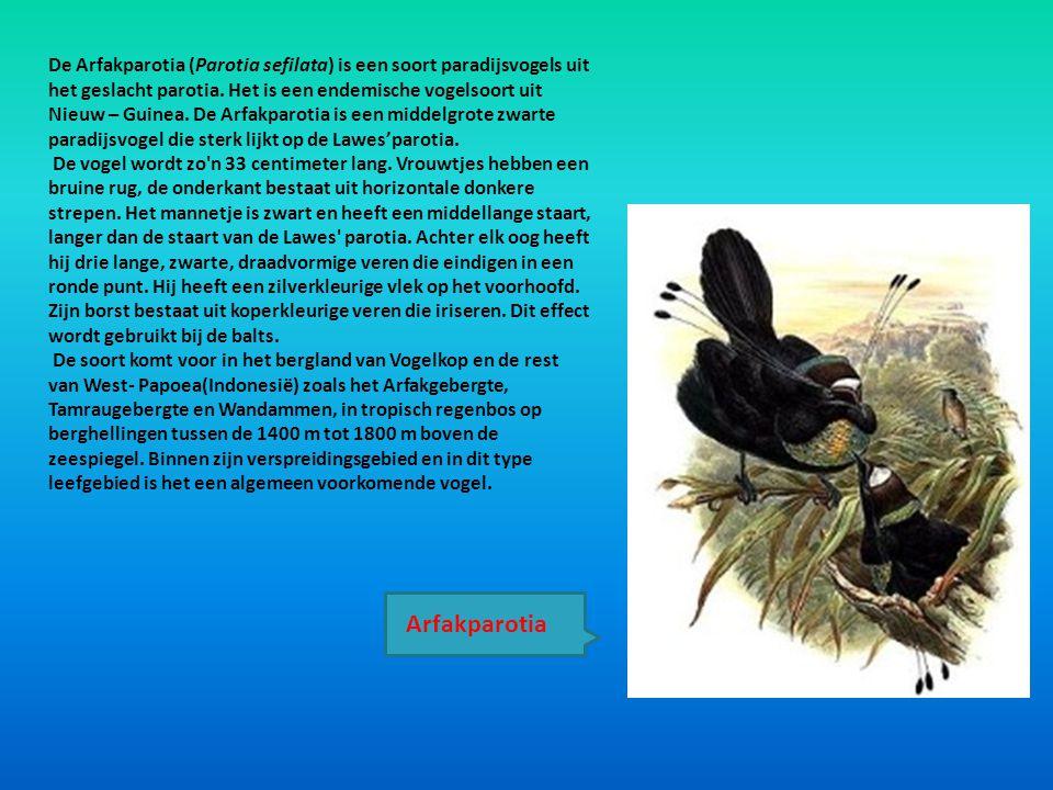 De Arfakparotia (Parotia sefilata) is een soort paradijsvogels uit het geslacht parotia. Het is een endemische vogelsoort uit Nieuw – Guinea. De Arfakparotia is een middelgrote zwarte paradijsvogel die sterk lijkt op de Lawes'parotia.
