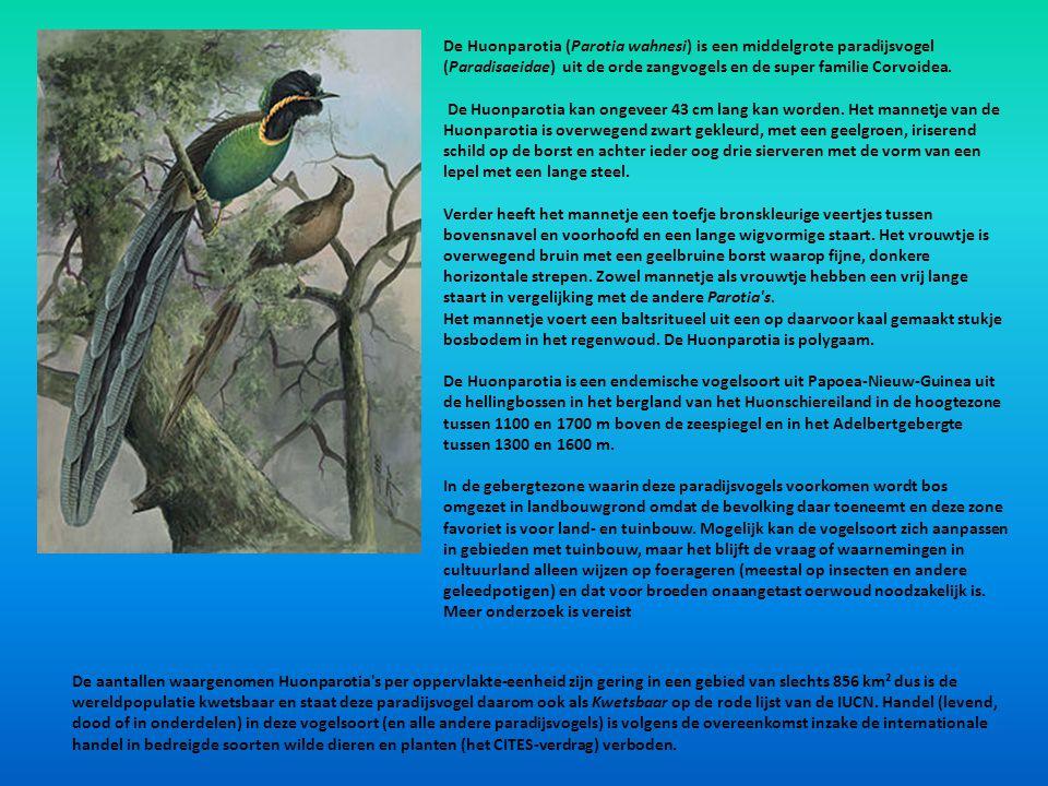 De Huonparotia (Parotia wahnesi) is een middelgrote paradijsvogel (Paradisaeidae) uit de orde zangvogels en de super familie Corvoidea.