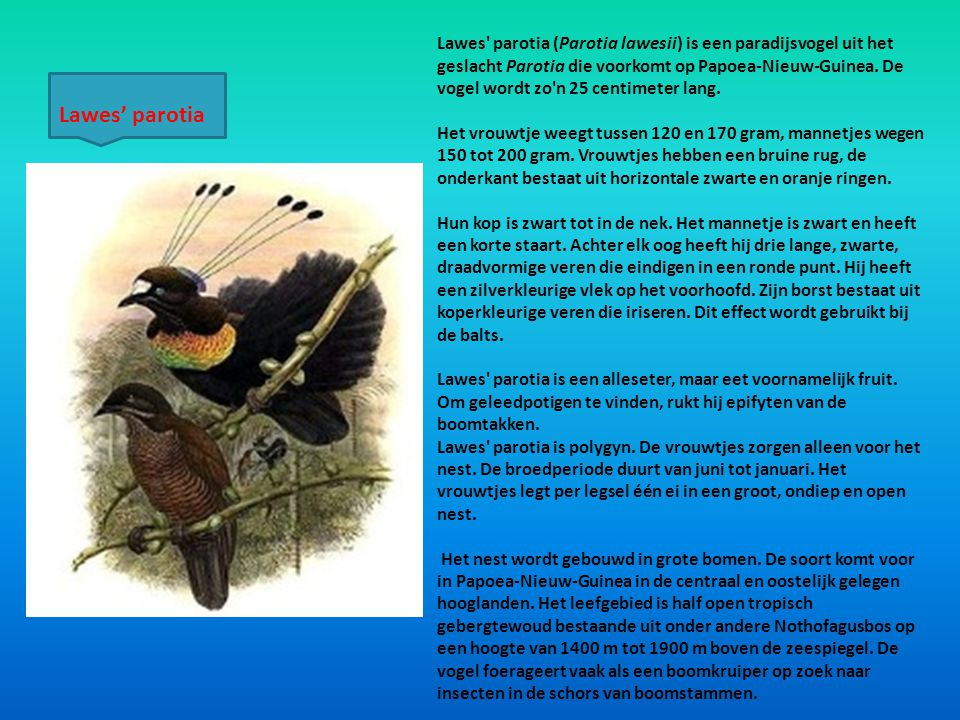 Lawes parotia (Parotia lawesii) is een paradijsvogel uit het geslacht Parotia die voorkomt op Papoea-Nieuw-Guinea. De vogel wordt zo n 25 centimeter lang.