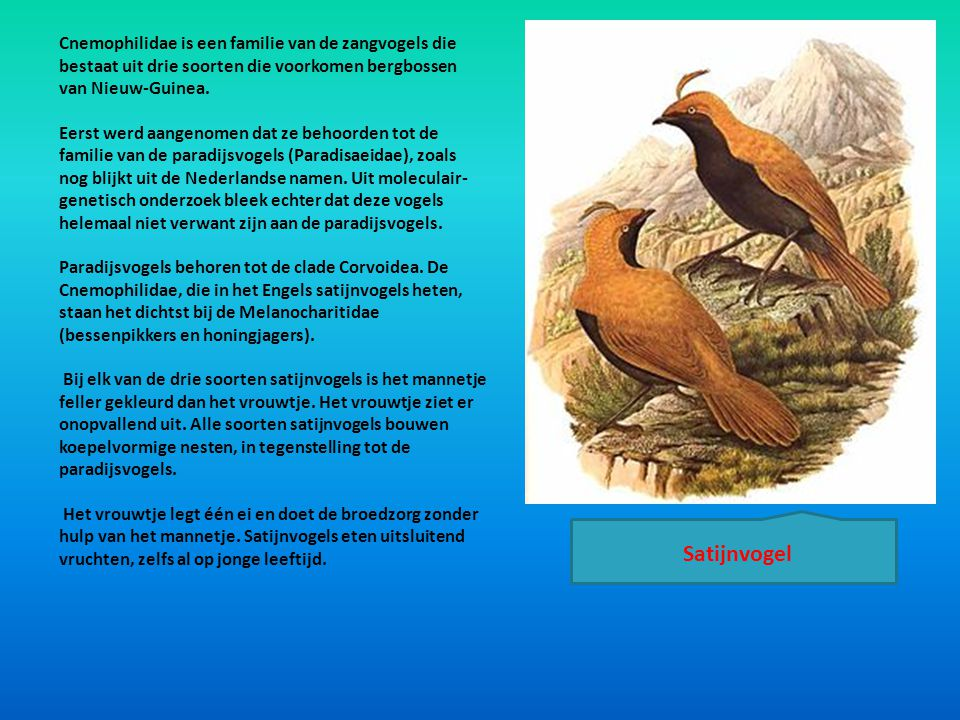 Cnemophilidae is een familie van de zangvogels die bestaat uit drie soorten die voorkomen bergbossen van Nieuw-Guinea.