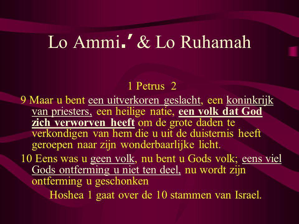 Lo Ammi.' & Lo Ruhamah 1 Petrus 2