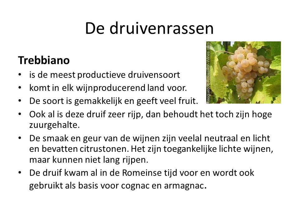 De druivenrassen Trebbiano is de meest productieve druivensoort