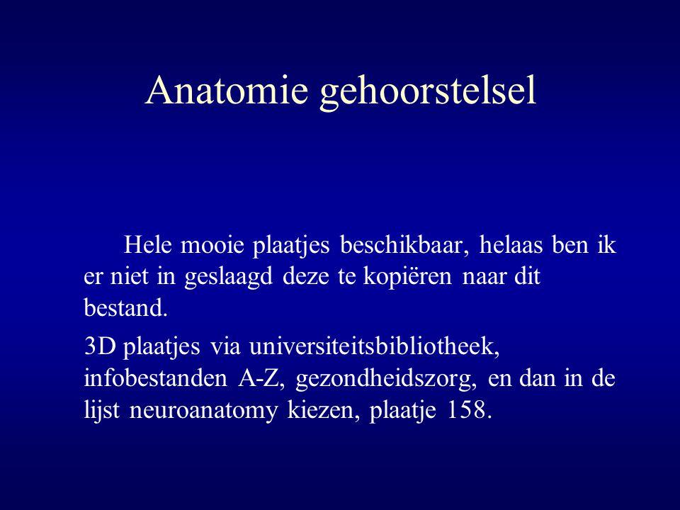 Anatomie gehoorstelsel