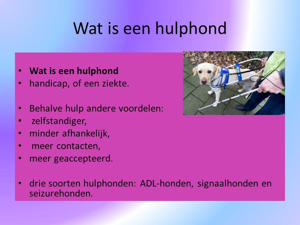Wat is een hulphond Wat is een hulphond handicap, of een ziekte.