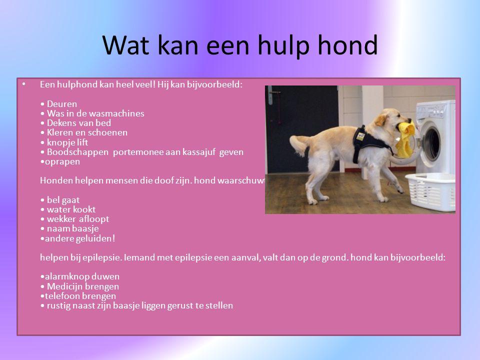 Wat kan een hulp hond