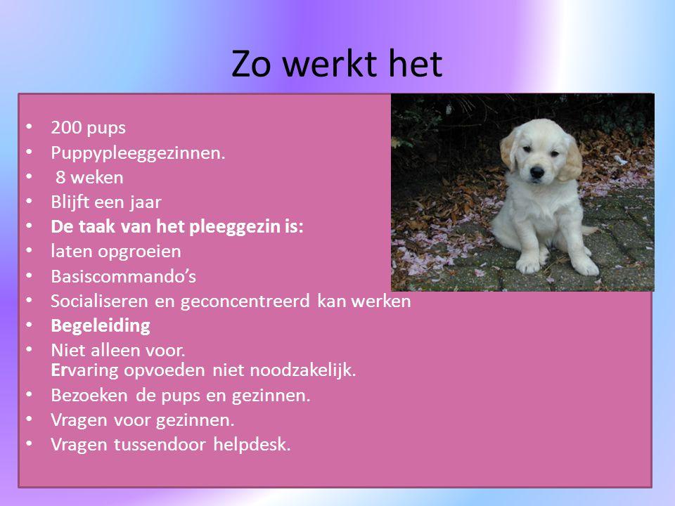 Zo werkt het 200 pups Puppypleeggezinnen. 8 weken Blijft een jaar
