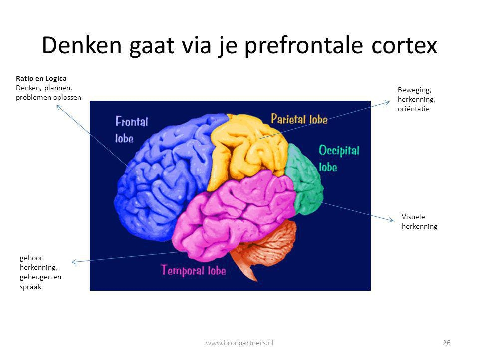 Denken gaat via je prefrontale cortex