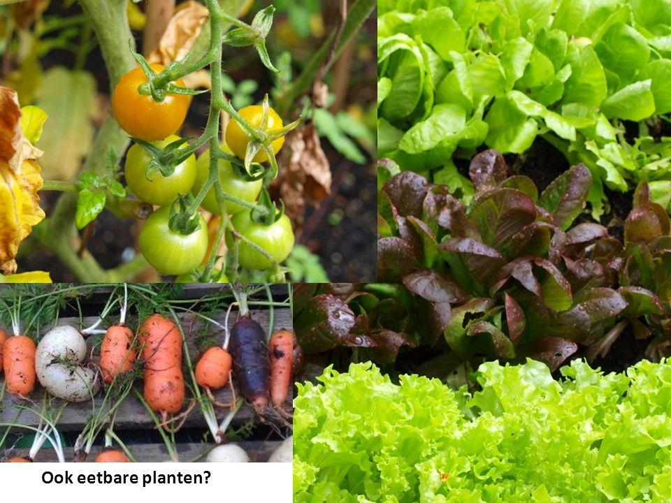 Ook eetbare planten