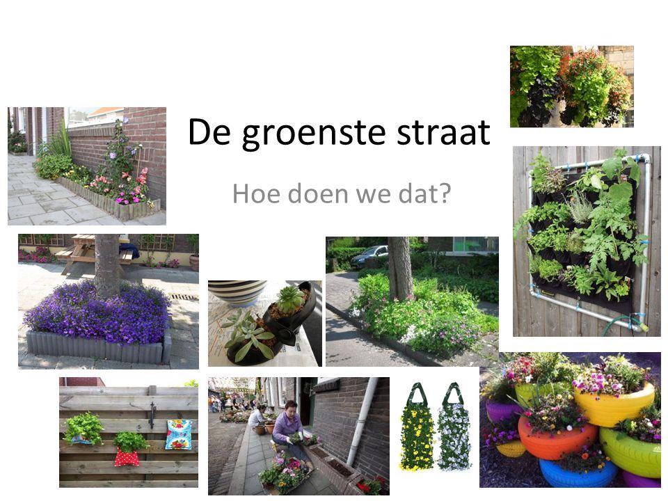 De groenste straat Hoe doen we dat