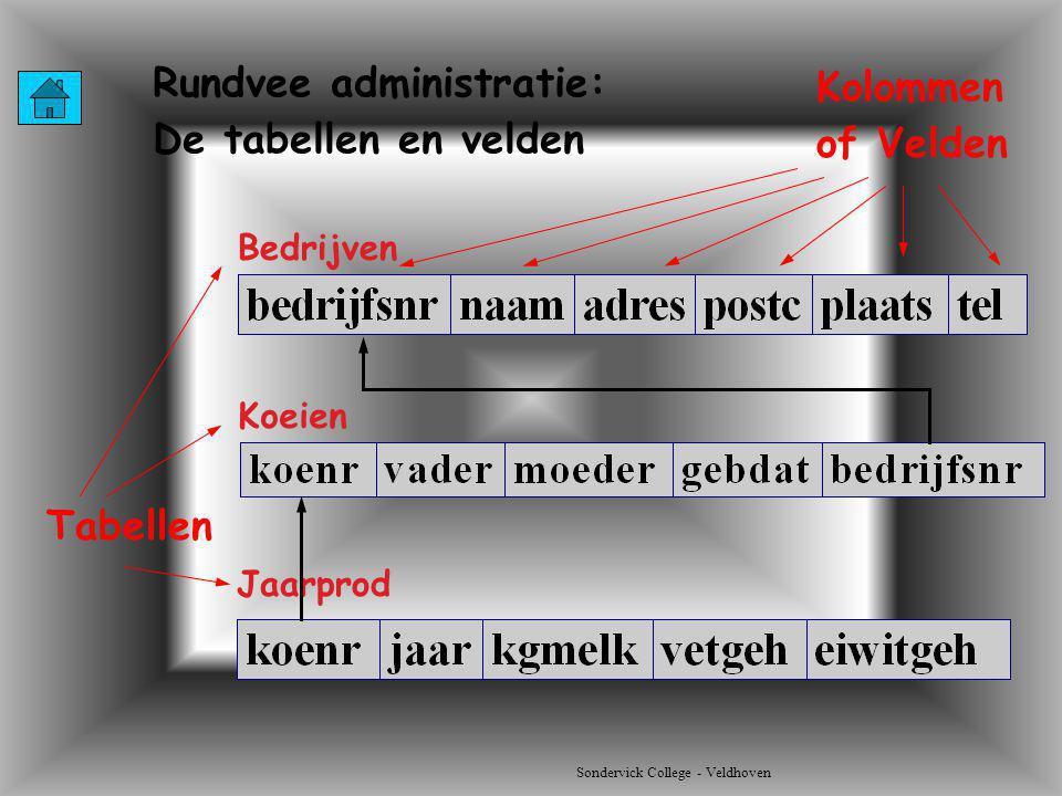 Rundvee administratie: De tabellen en velden Kolommen of Velden