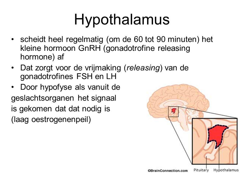 Hypothalamus scheidt heel regelmatig (om de 60 tot 90 minuten) het kleine hormoon GnRH (gonadotrofine releasing hormone) af.