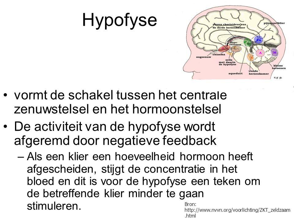 Hypofyse vormt de schakel tussen het centrale zenuwstelsel en het hormoonstelsel.