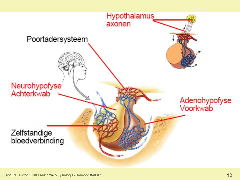FHV2009 / Cxx55 9+10 / Anatomie & Fysiologie - Hormoonstelsel 1