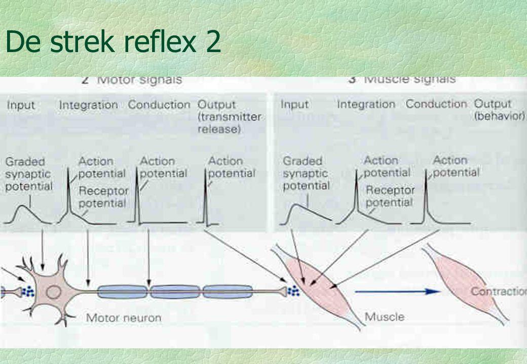 De strek reflex 2 18-09-00
