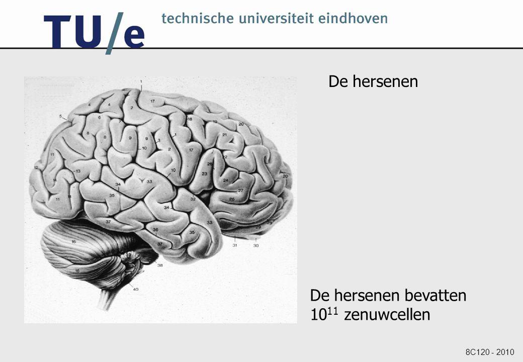 De hersenen De hersenen bevatten 1011 zenuwcellen