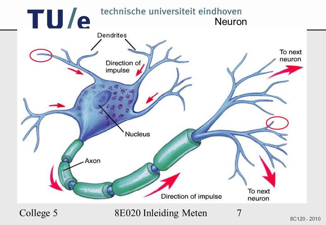 Neuron College 5 8E020 Inleiding Meten