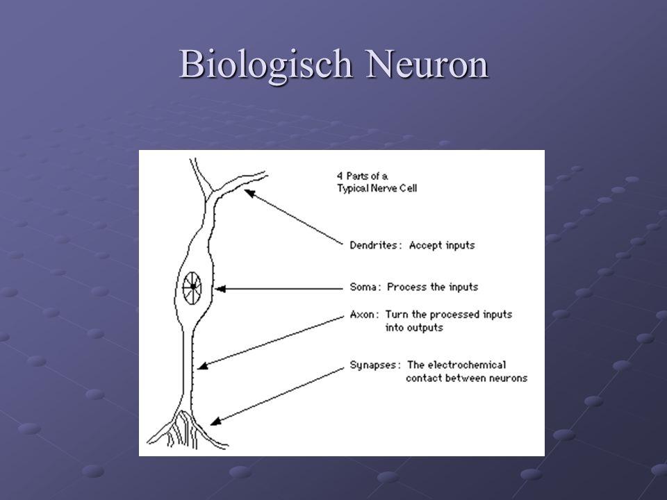 Biologisch Neuron