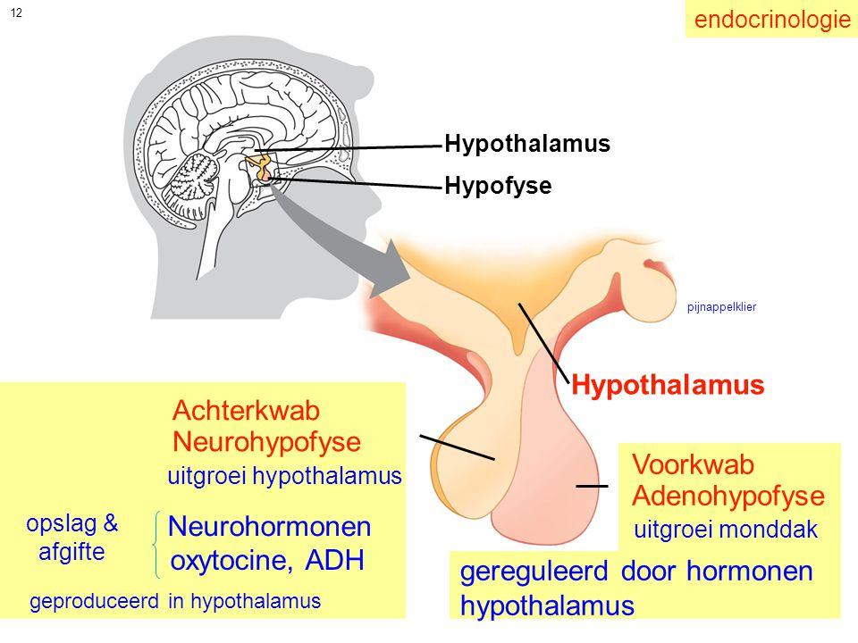 gereguleerd door hormonen hypothalamus