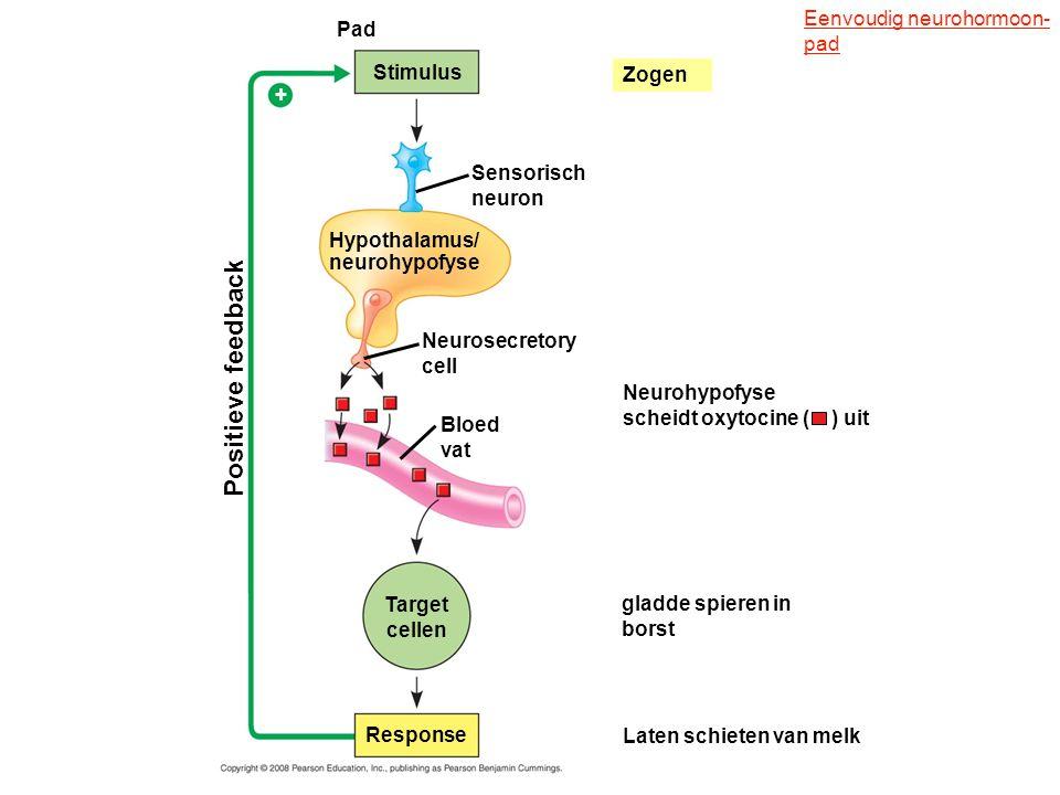 Positieve feedback Eenvoudig neurohormoon- pad Pad Stimulus Zogen +