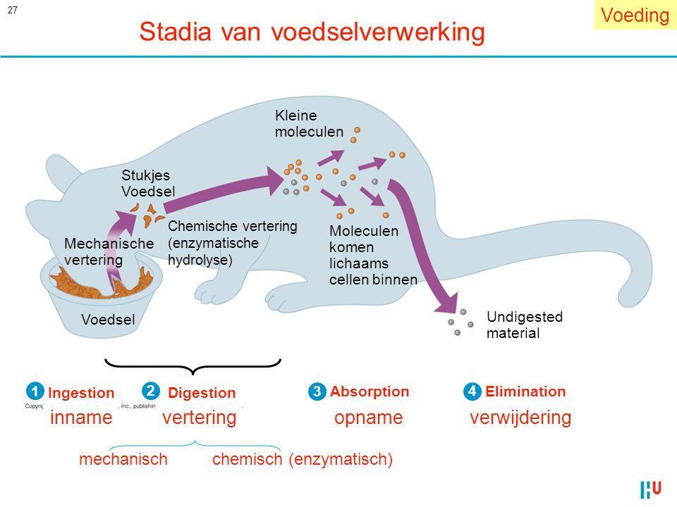 Stadia van voedselverwerking