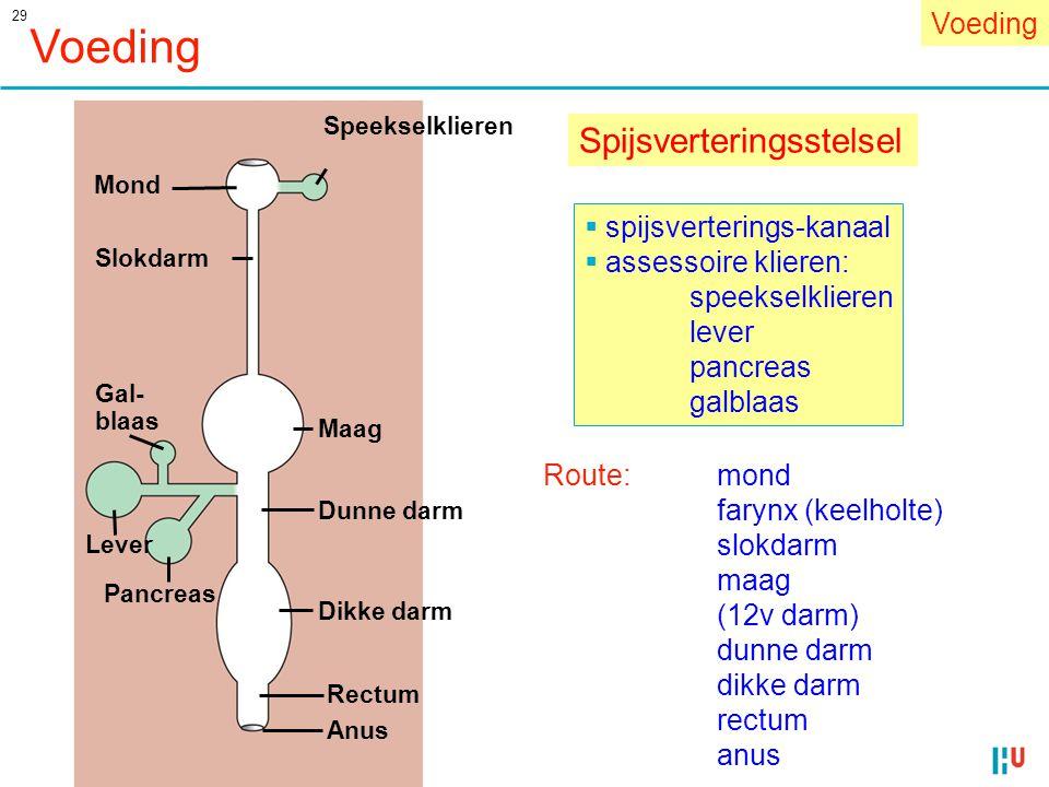 Voeding Spijsverteringsstelsel Voeding spijsverterings-kanaal