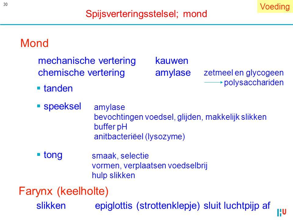 Mond Farynx (keelholte) Spijsverteringsstelsel; mond