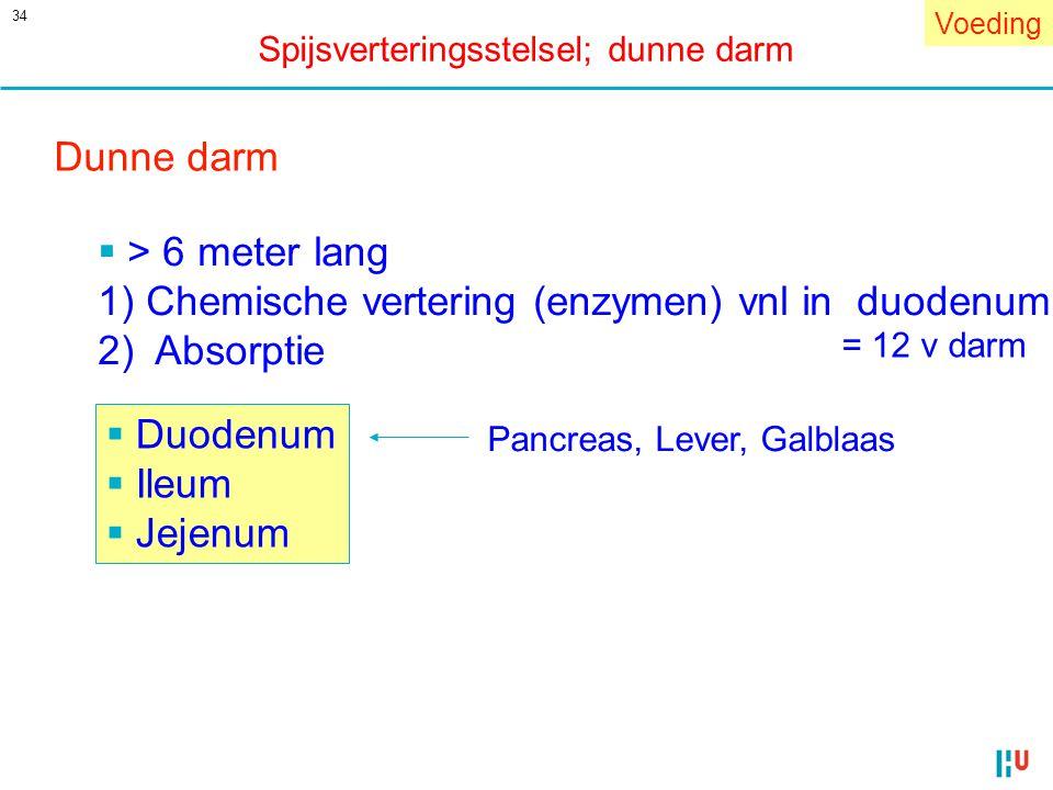 1) Chemische vertering (enzymen) vnl in duodenum 2) Absorptie