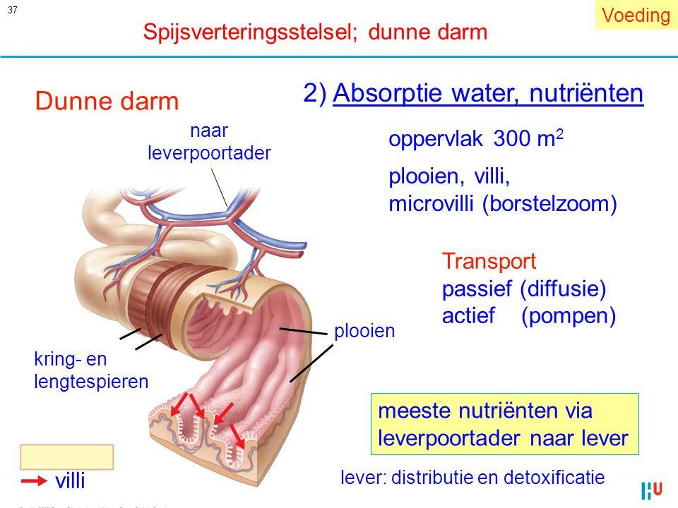 2) Absorptie water, nutriënten Dunne darm
