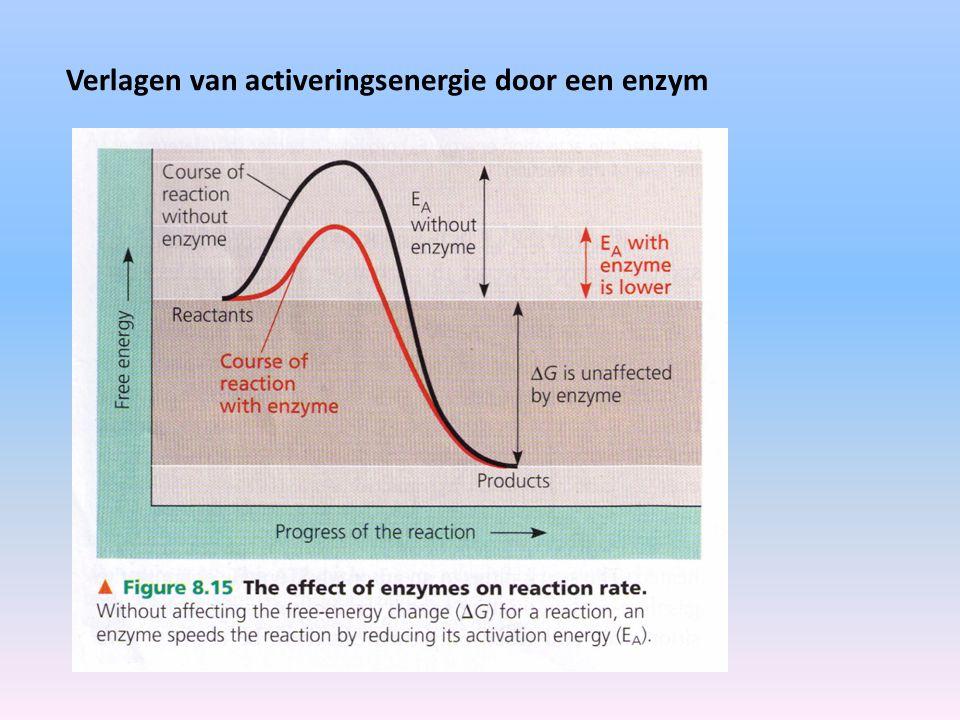 Verlagen van activeringsenergie door een enzym