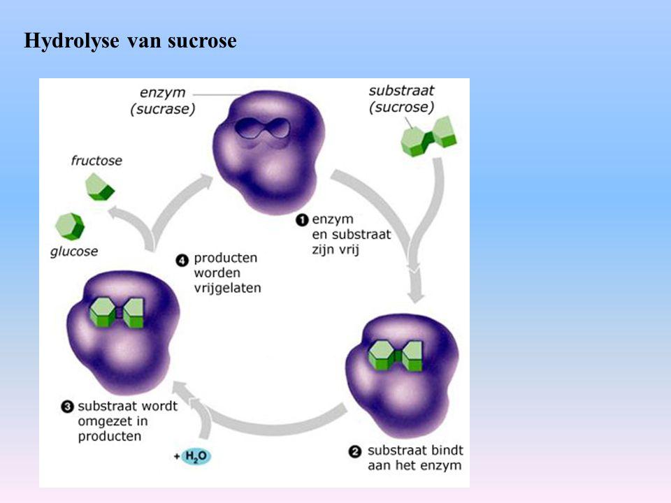 Hydrolyse van sucrose