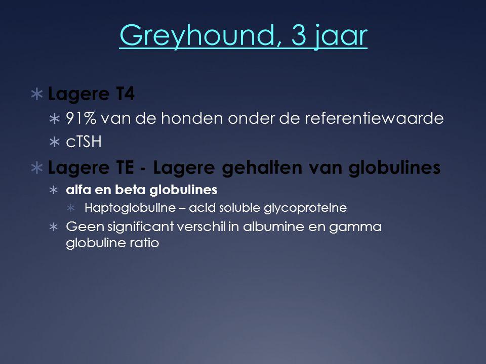 Greyhound, 3 jaar Lagere T4 Lagere TE - Lagere gehalten van globulines