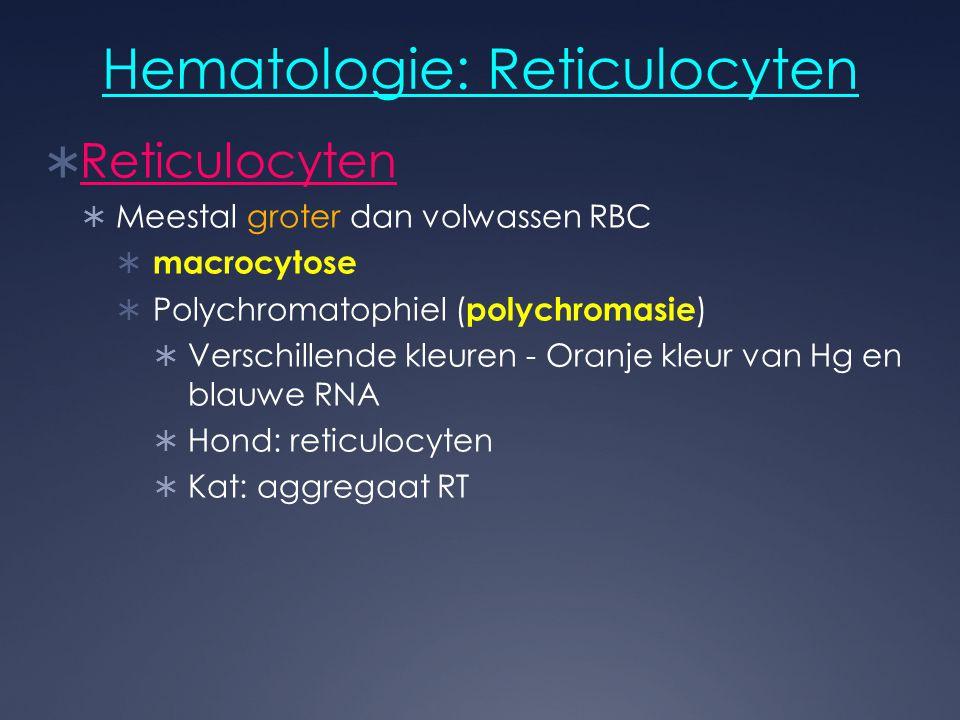 Hematologie: Reticulocyten