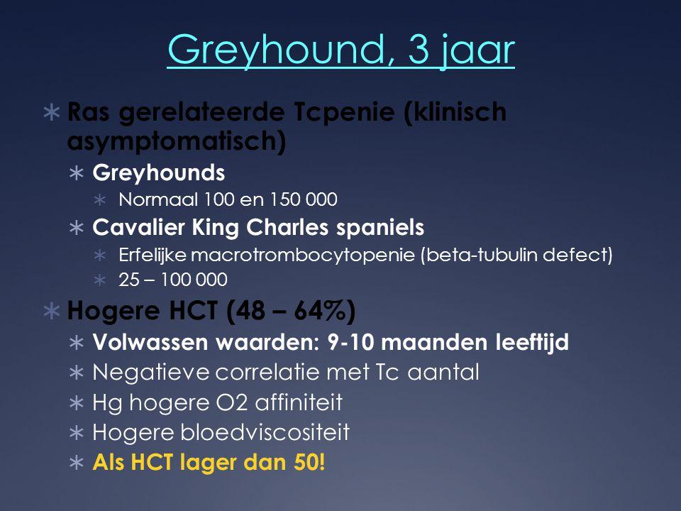 Greyhound, 3 jaar Ras gerelateerde Tcpenie (klinisch asymptomatisch)